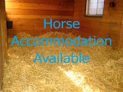 Horse Accommodation Available