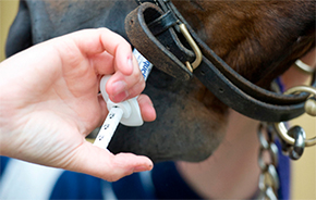 Dewormer Resistance Sparks FDA Request By Nikki Alvin-Smith