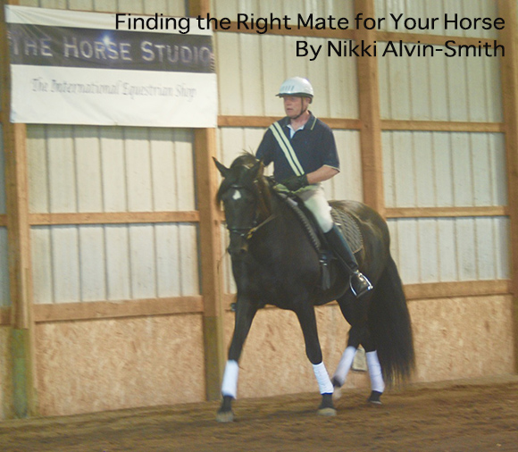 Finding the Right Mate for Your Horse By Nikki Alvin-Smith