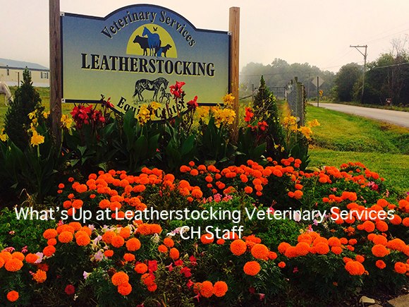What's Up at Leatherstocking Veterinary Services~ CH Staff