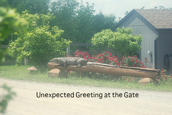 Unexpected Greeting at the Gate