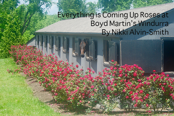 Everything is Coming Up Roses at Boyd Martin's Windurra By Nikki Alvin-Smith