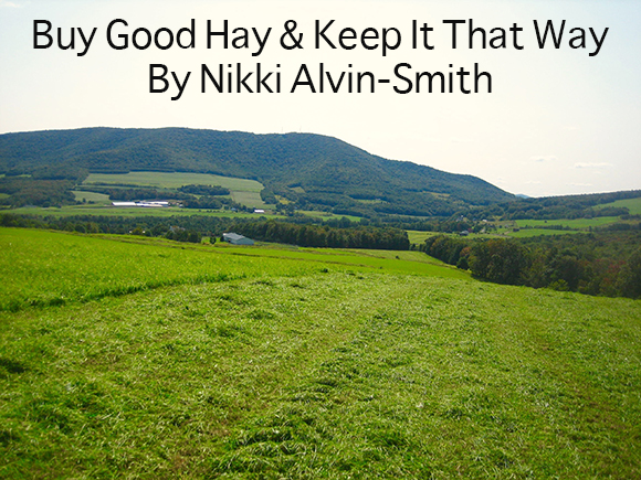 Buy Good Hay & Keep It That Way By Nikki Alvin-Smith