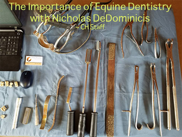 The Importance of Equine Dentistry with Nicholas DeDominicis~ CH Staff