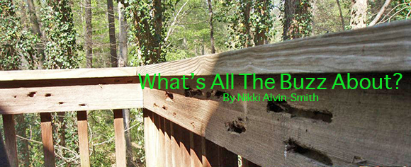 What's All The Buzz About? By Nikki Alvin-Smith