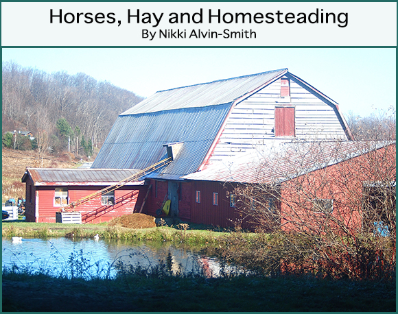 Horses, Hay and Homesteading By Nikki Alvin-Smith