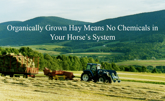 Organically Grown Hay Means No Chemicals in Your Horse's System